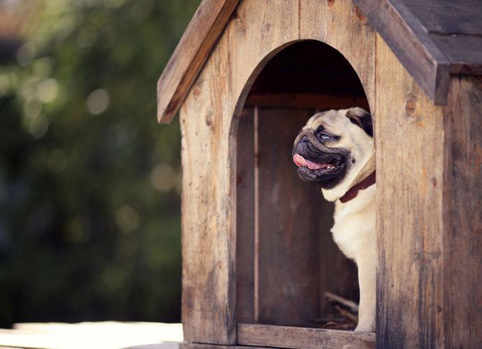 Doggy Daycare & Boarding